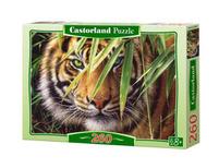 Castorland Puzzle 260 elemntów Tygrys